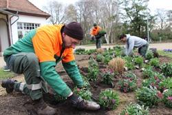 Mitarbeiter der AGL bepflanzen die Beete im Kurpark. Foto: Hansestadt Lüneburg